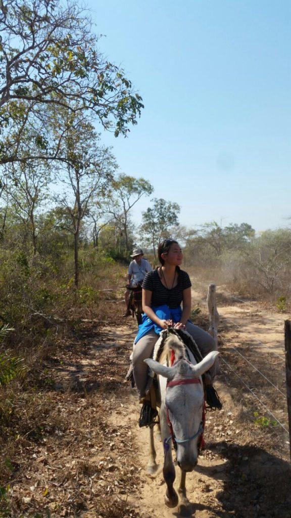 Activity Pantanal