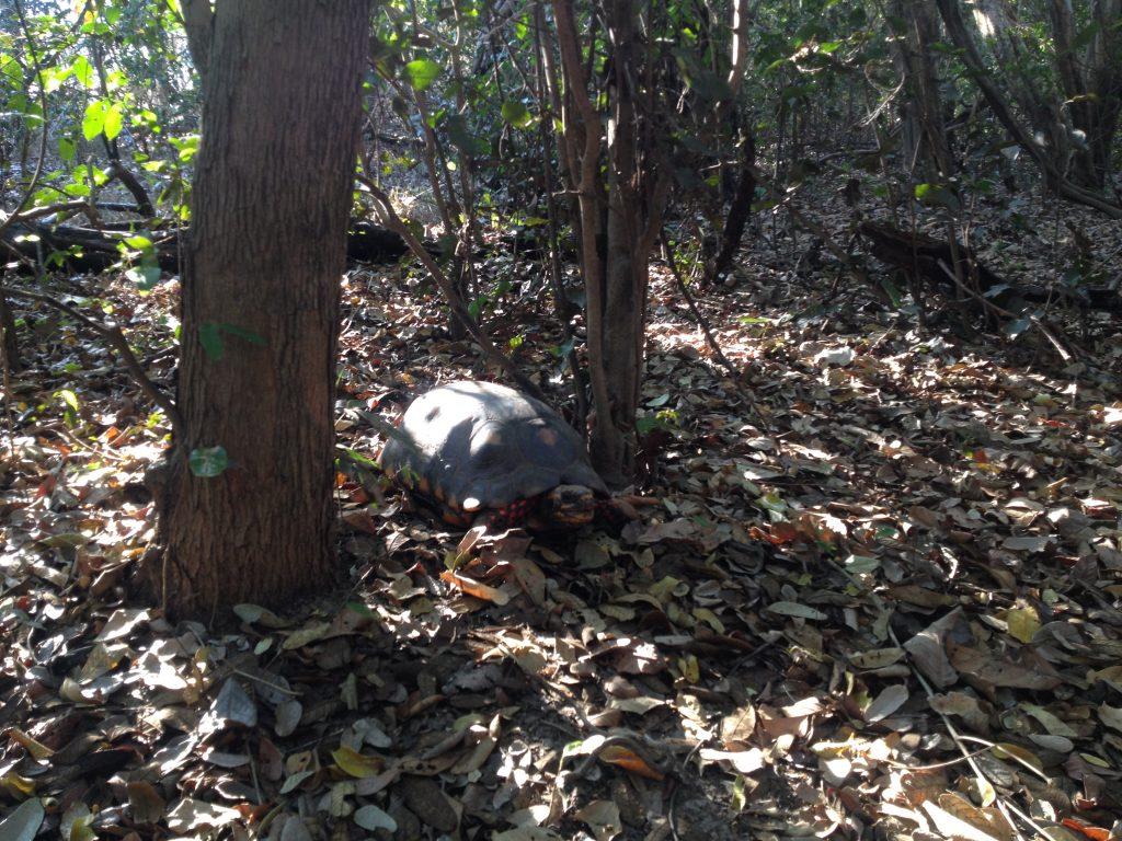Pantanal animals