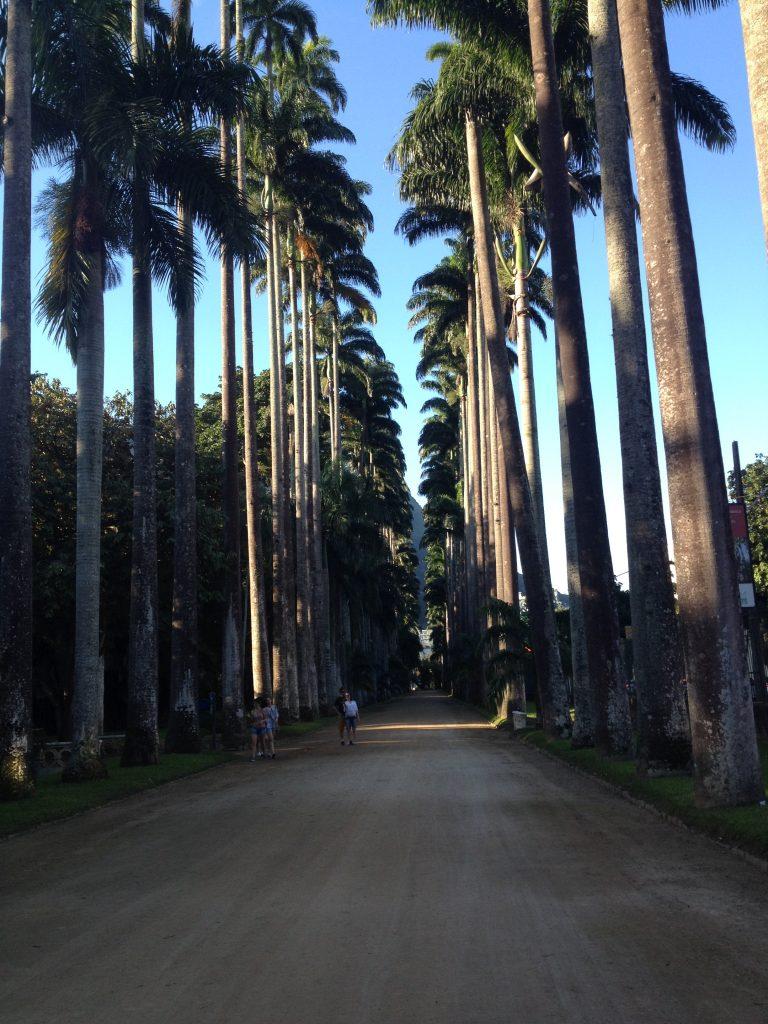 Botanical Garden, Rio de Janeiro.