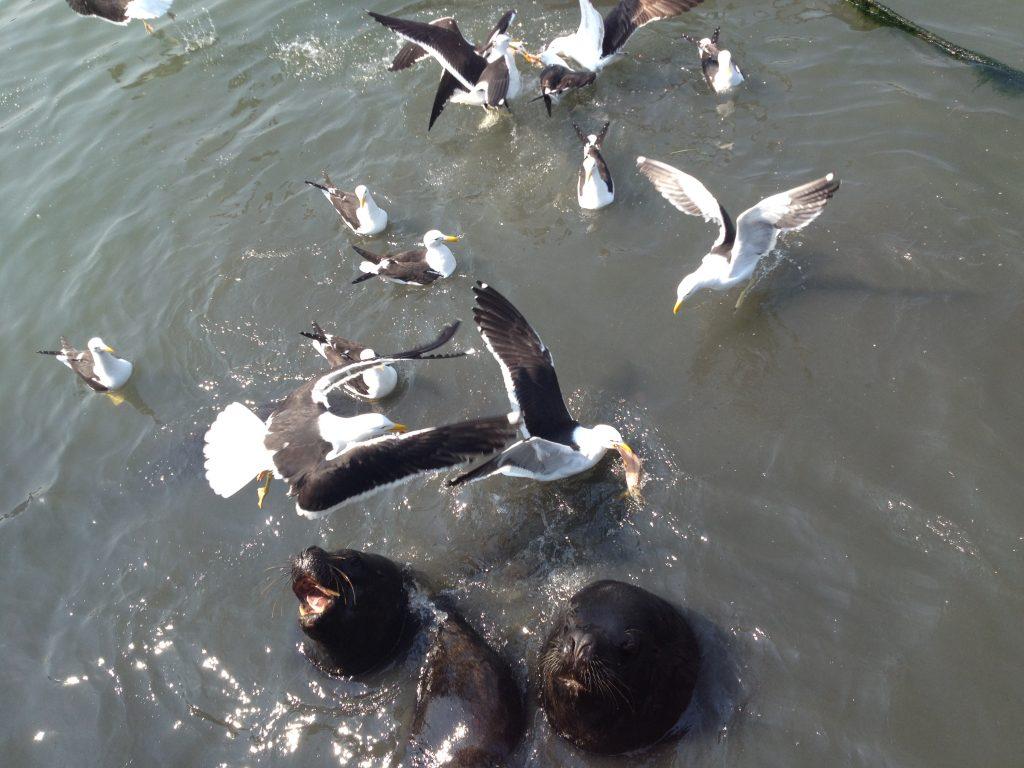Seagulls, Punta del Este