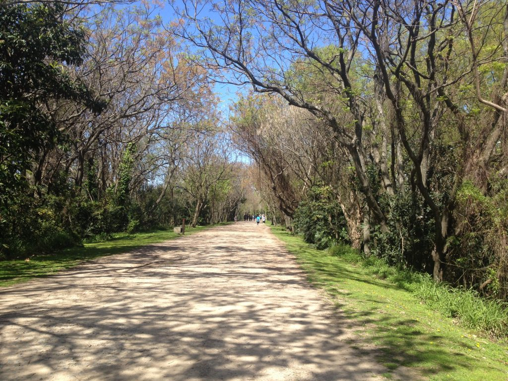 Costanera Sur Ecological Reserve