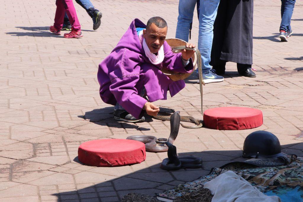snake marrakech