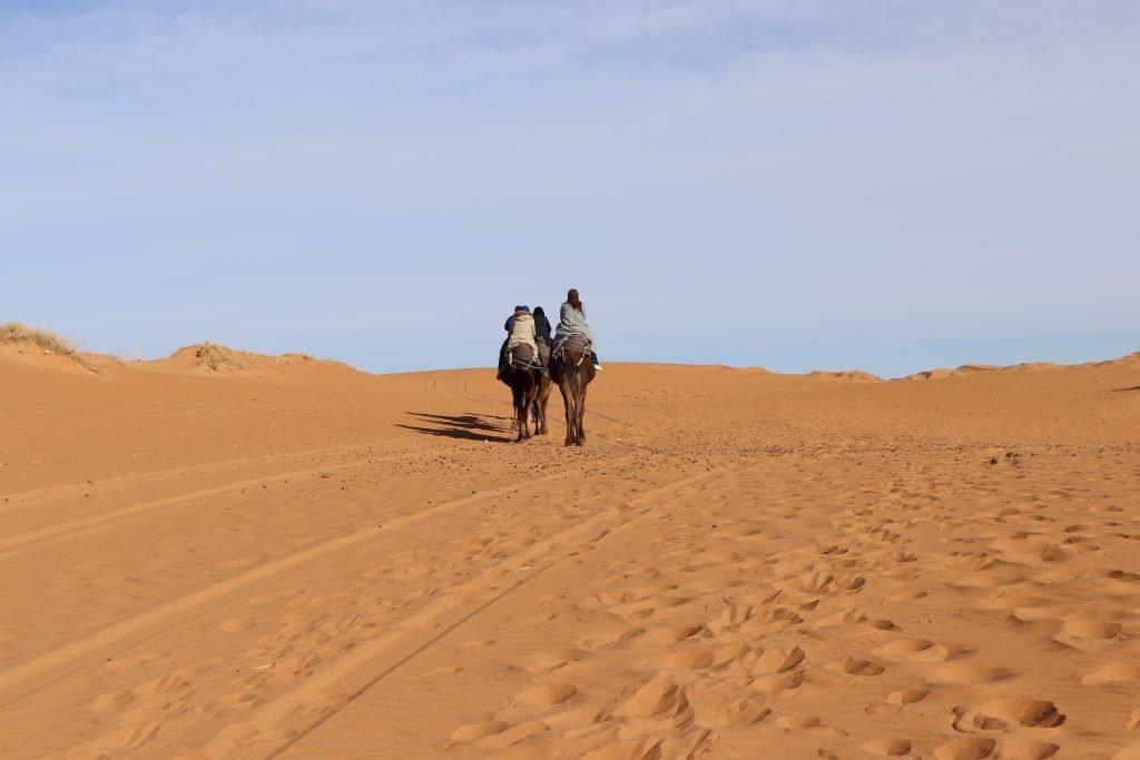 camel sahara desert
