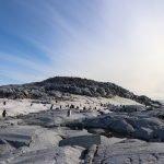 Antarctica Picture