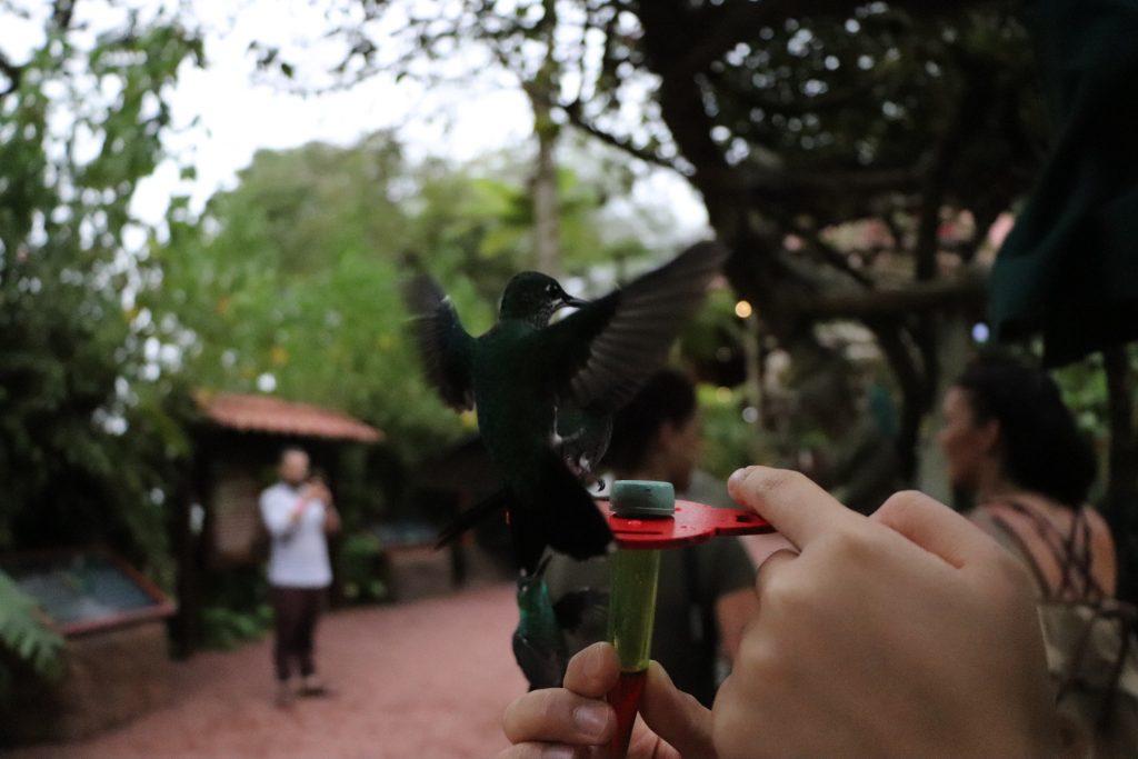 Hummingbird Costa Rica