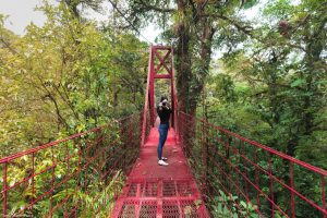 Hanging Bridge Monteverde