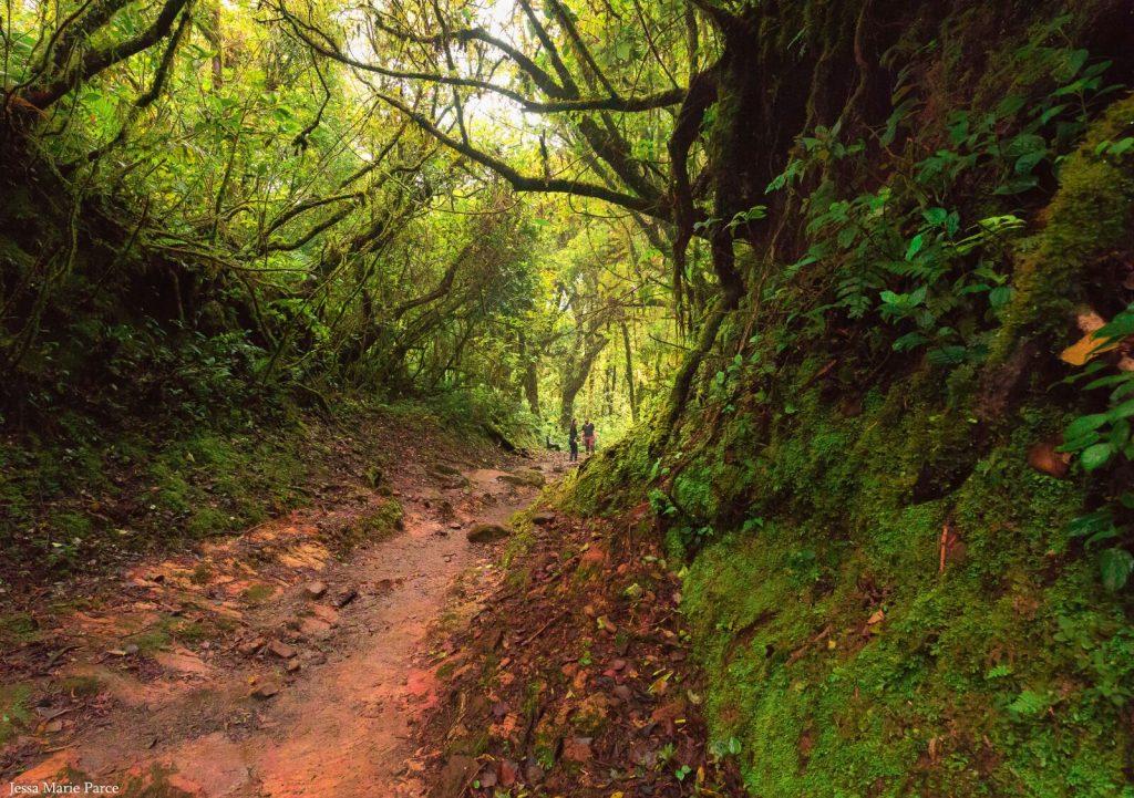 Clourd forest costa rica