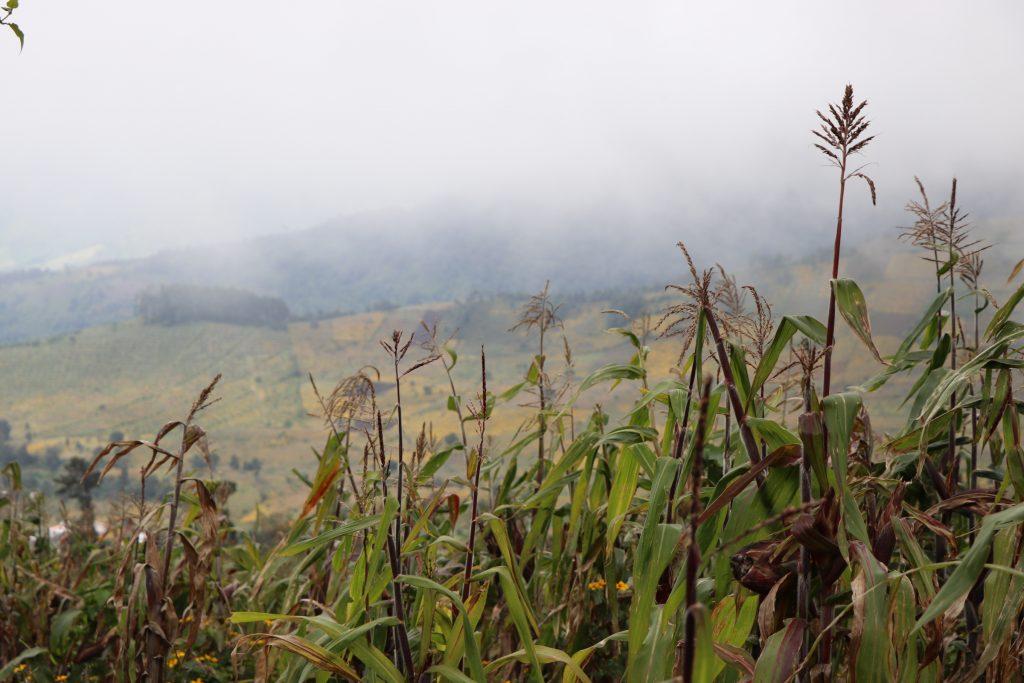 Hiking a volcano in guatemala