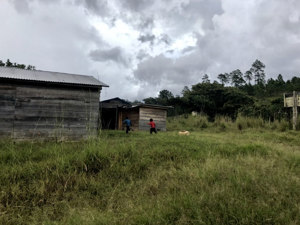 landscape chiapas