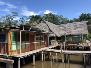 Amazonia in Peru