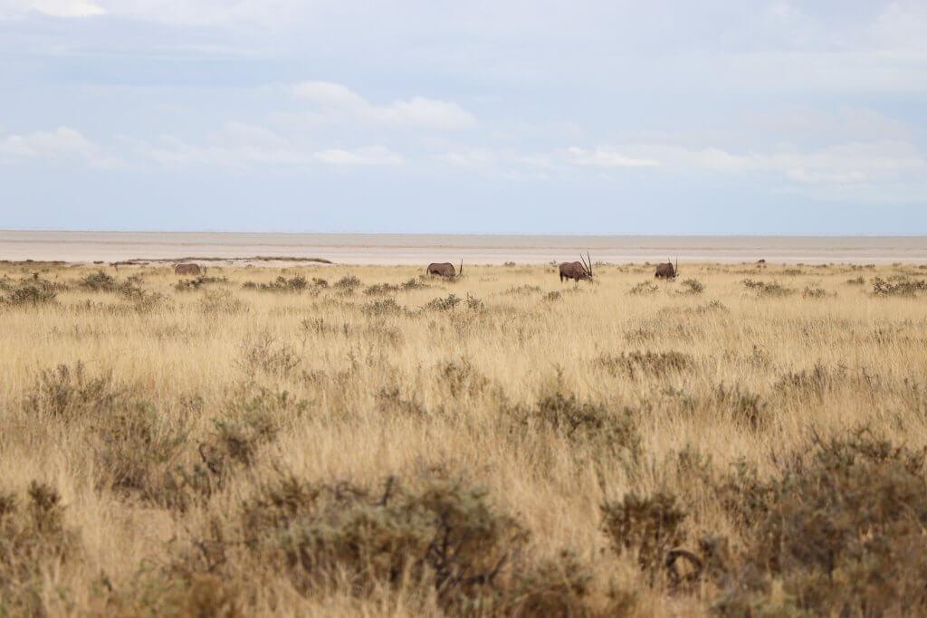 Landscape Etosha Namibia